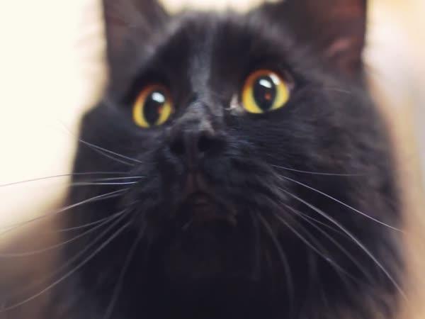 Kočičí dobrodružství
