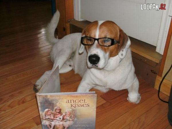 OBRÁZKY - Ze života zvířátek 95.díl