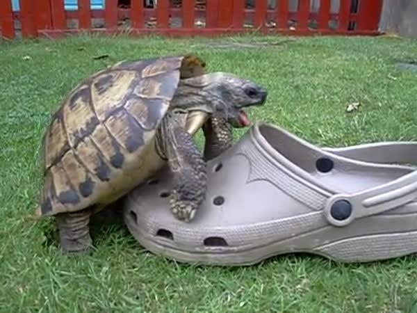 Soulož želvy s botou