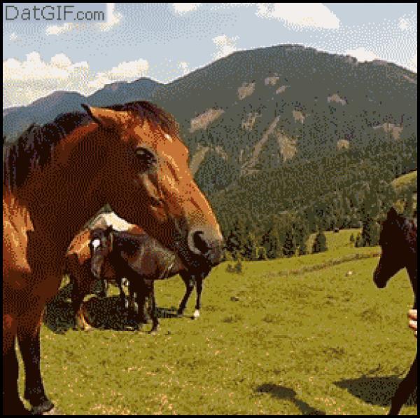 GALERIE - Když zvířata útočí !