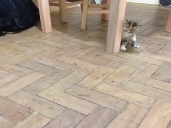 Kočka vs brouk