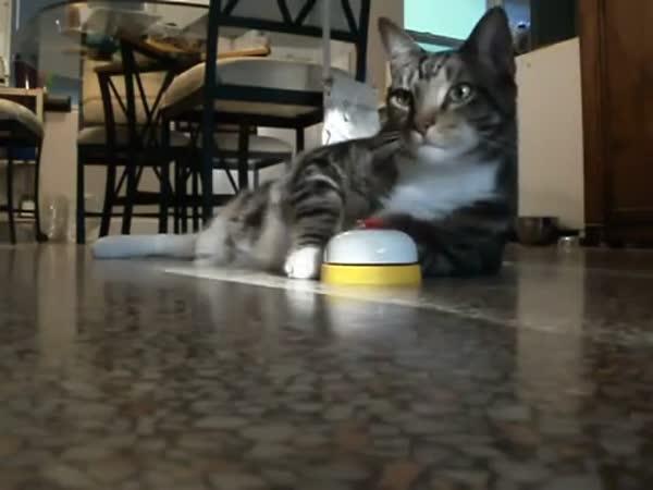 Líná kočka zvoní pro žrádlo