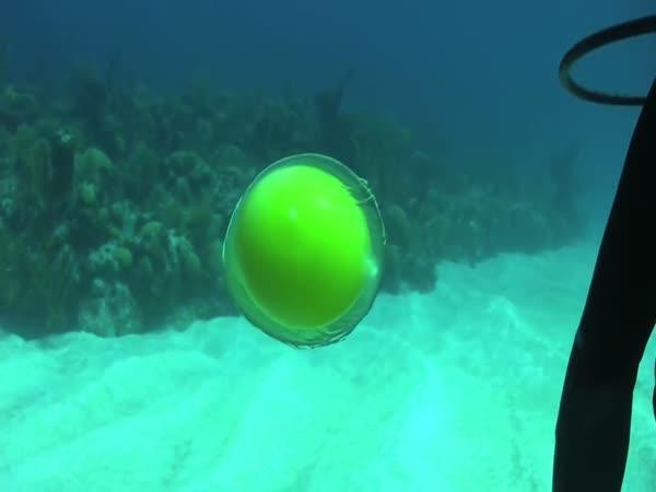 Vejce pod vodou