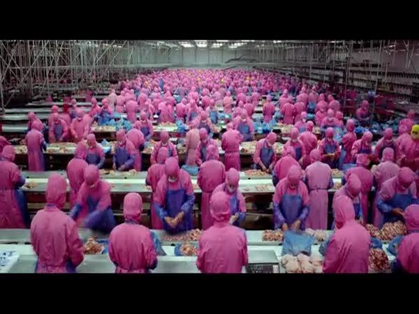 Extrémní továrny na maso