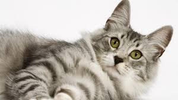 Kočka vs. ponožka