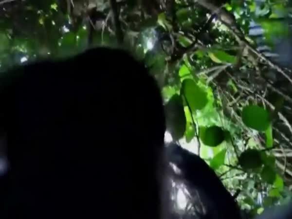 Drzá opice ukradla turistovi kameru
