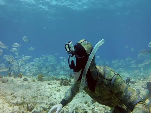 GoPro - Pod hladinou