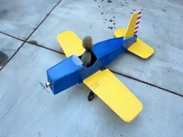 Veverka ukradla letadélko