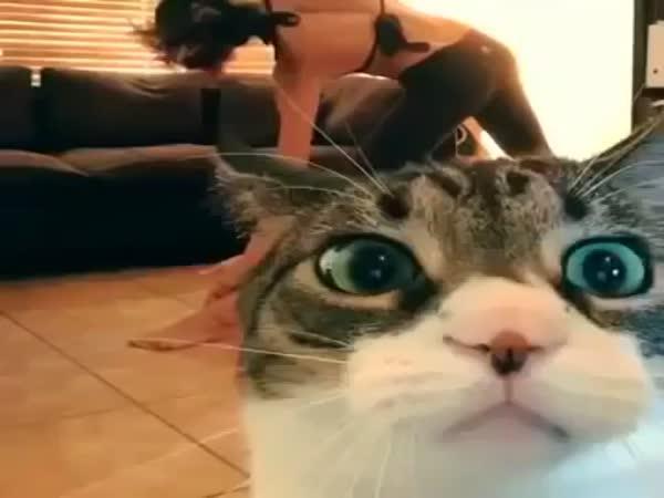 Kočka zkazí video jogínky