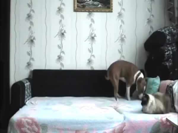 Pes řádí sám doma na posteli