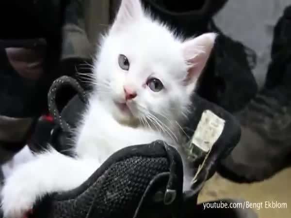 Zvířátka co milují krabice