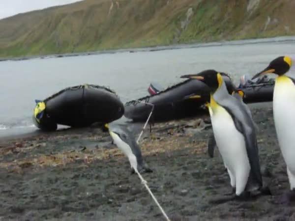 Tučňáci vs. provaz
