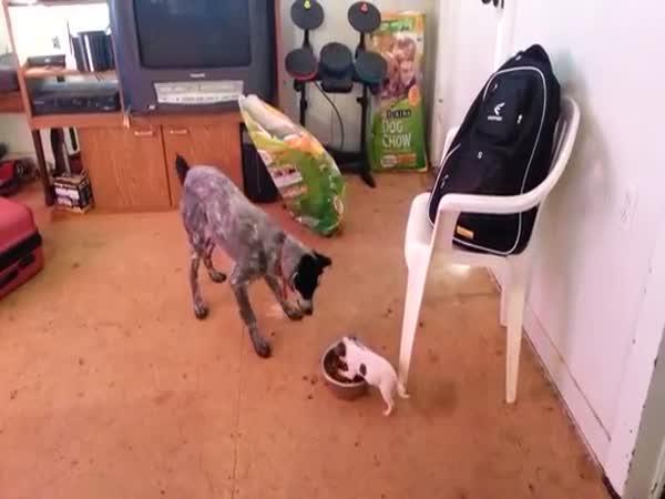 Malý pes versus velký pes