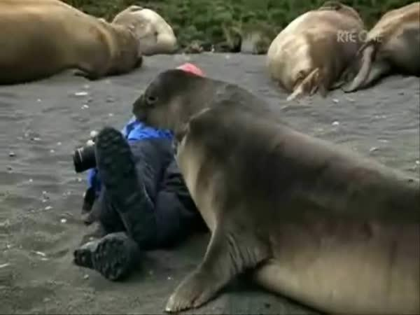 Tuleni přijali fotografa za svého