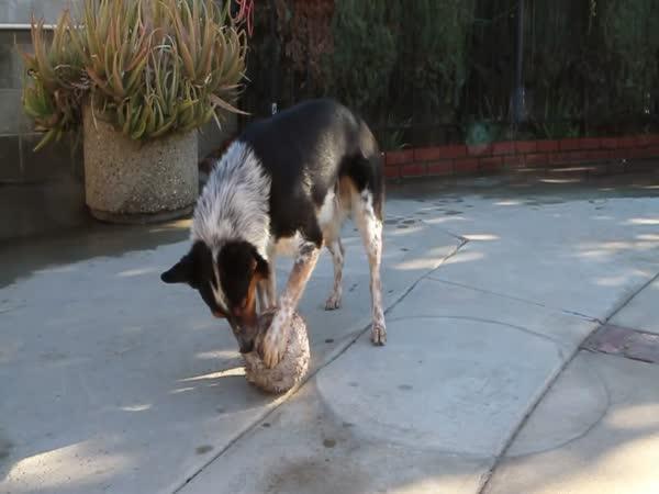 Nejchytřejší pes na světě