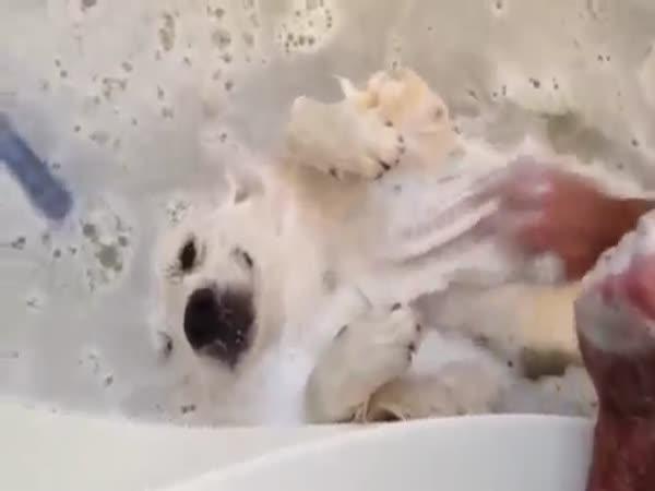 Pejsek miluje koupání ve vodě