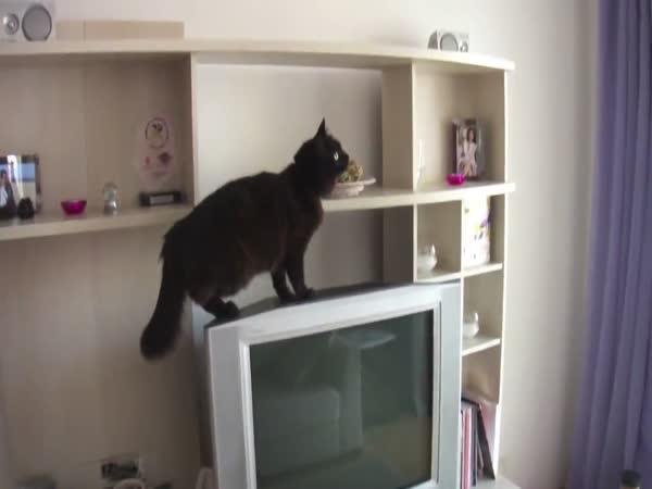 Kočičí Mission Impossible