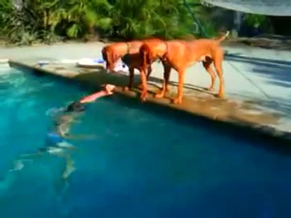 Pes má strach o páníčka ve vodě