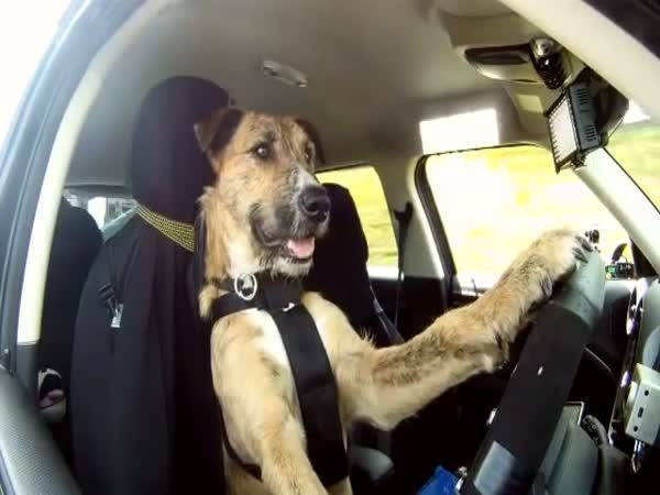 Pes řidičem