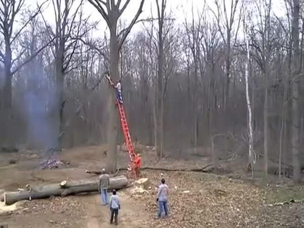 Jak (ne)kácet strom