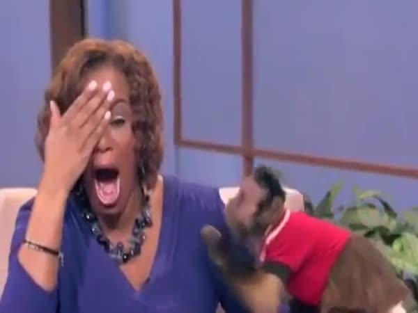 Opice praštila moderátorku