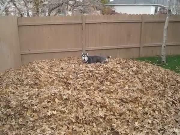 Pes, co si hraje v listí