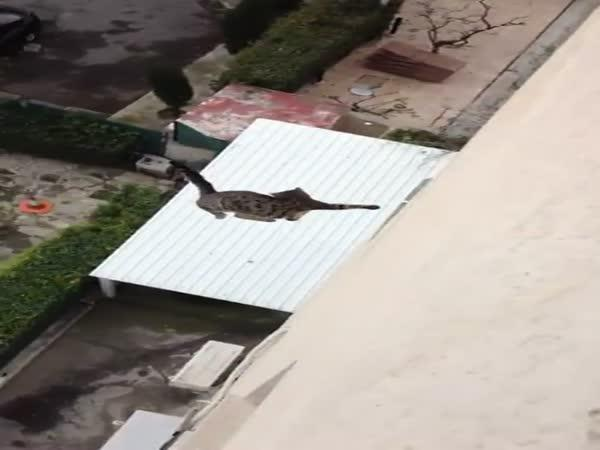 Pád kočky z výšky