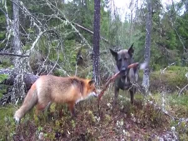 Nejlepší kamarád z lesa