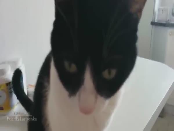 Kompilace provinilých kočiček