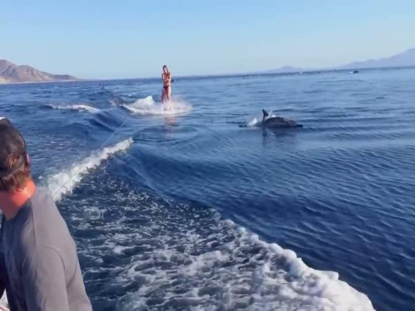 Wakeboarding s delfíny