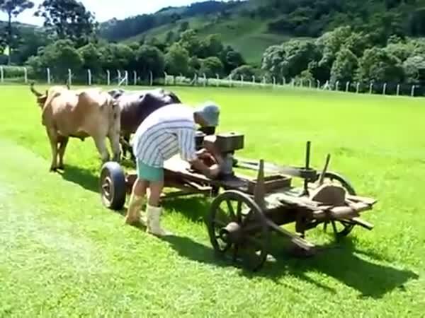 Brazilská sekačka na trávník