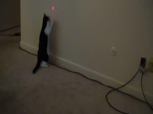 Kočka ponásleduje laser