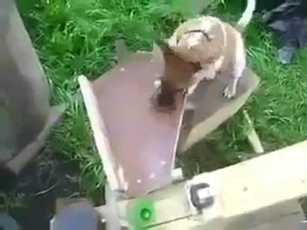 Když inženýr vlastní pejska