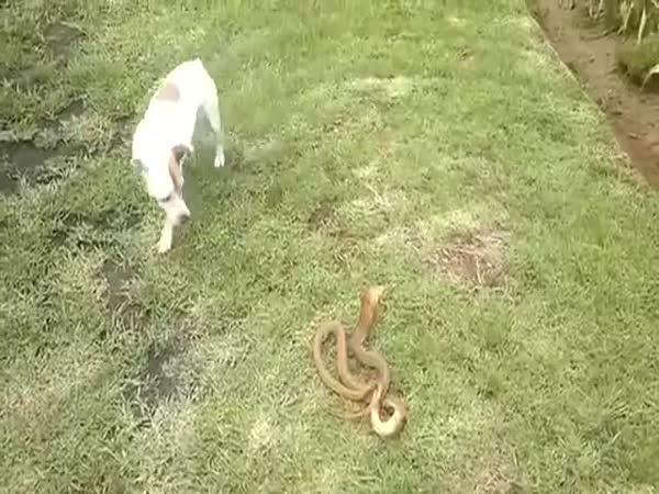 Pes vs. had