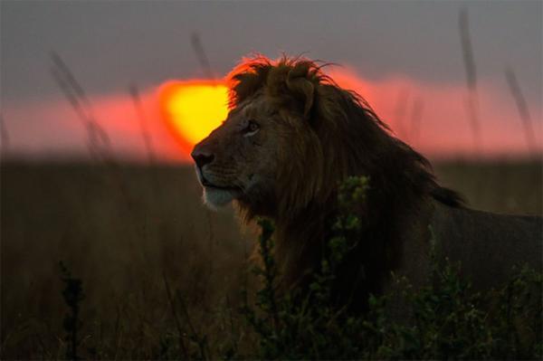 GALERIE - Západ Slunce v Keni