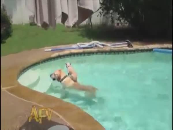 Psí lodní doprava