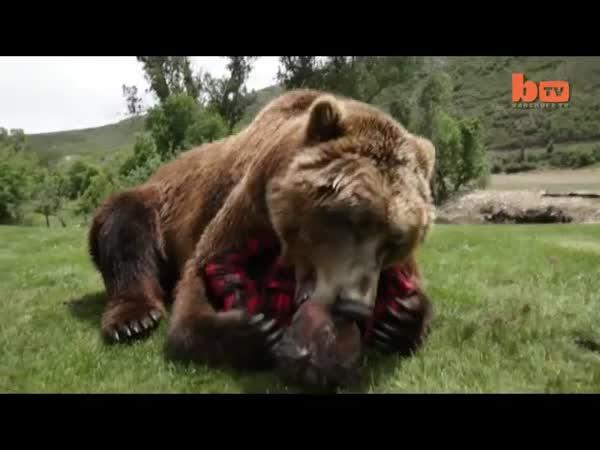 Přítulný medvěd
