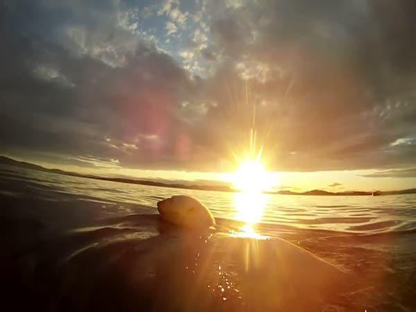 GoPro - Plavání s polárními medvědy
