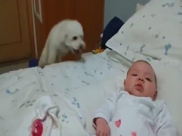 Natěšené štěně