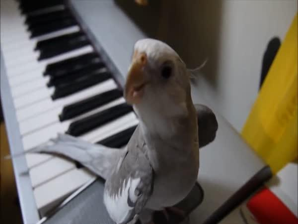 Muzikálový opeřenec