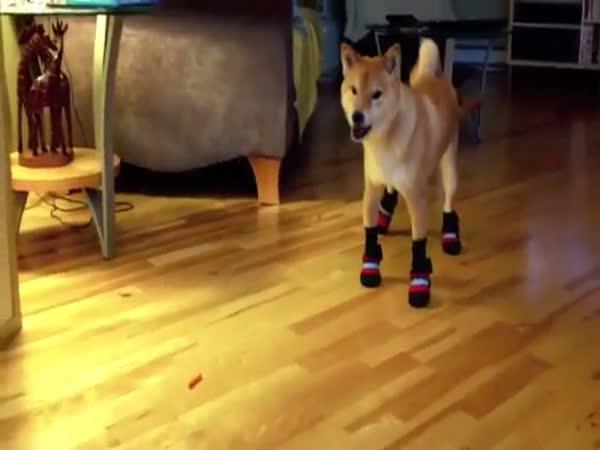 Pes v botách