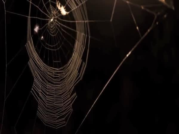 Jak vzniká pavučina