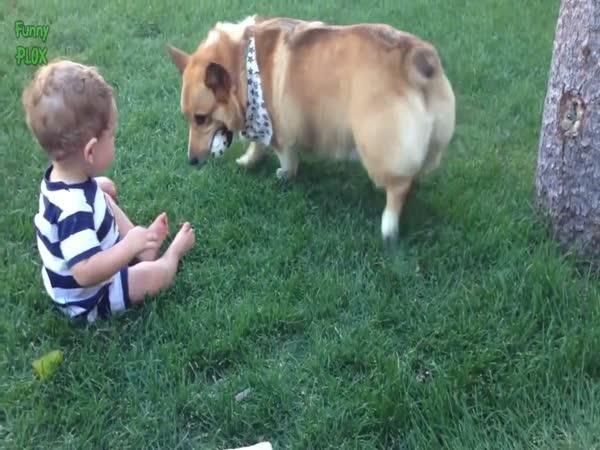 Psi jako učitelé