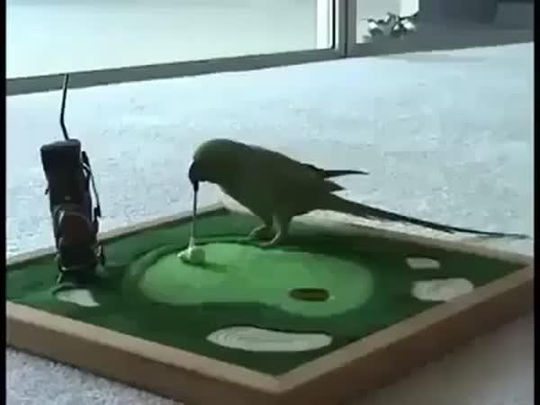 Vycvičený papoušek