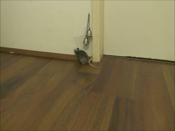 Myš chce otevřít dveře