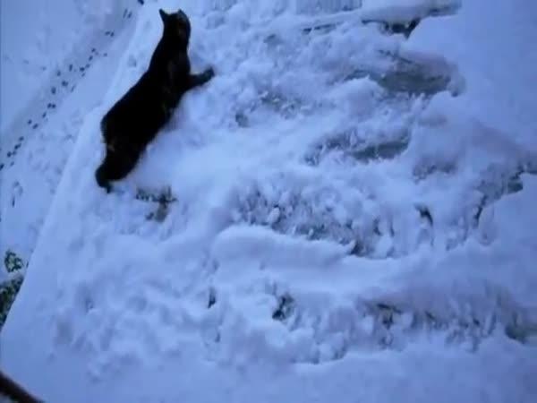 Kočka ve sněhu