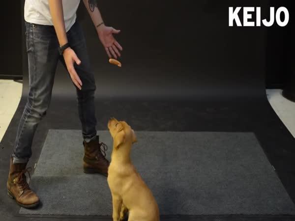 Reakce psů na létající párek