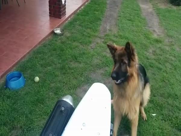 Pes vs motorka
