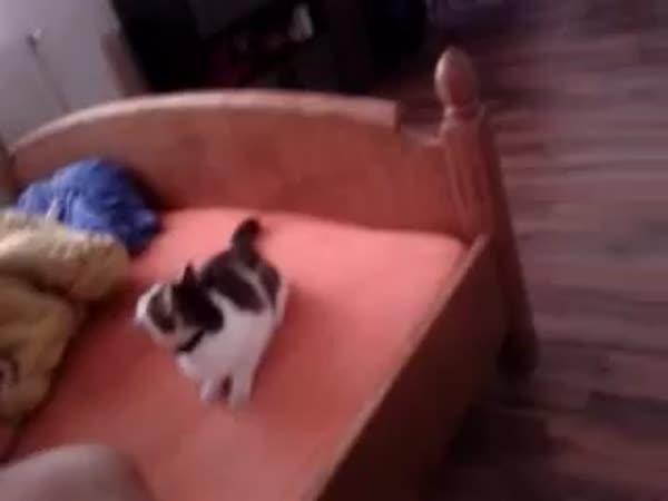 Aportující kočka