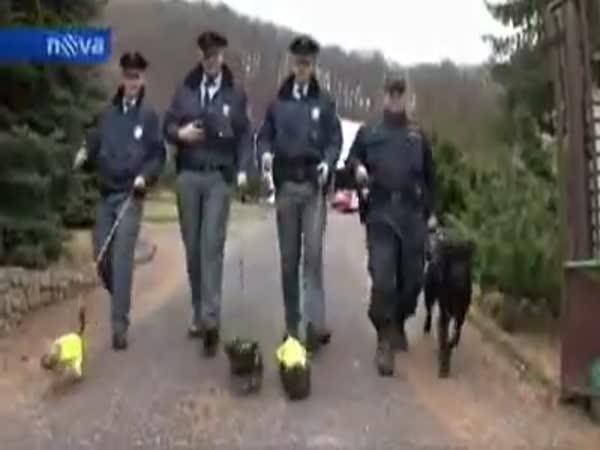 Policejní výcvik jorkšírů v ČR
